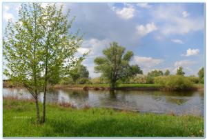 деревья и озеро