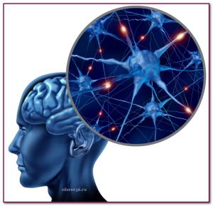 клетки мозга ств