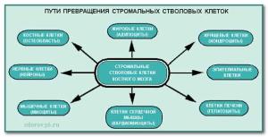пути превращения клеток